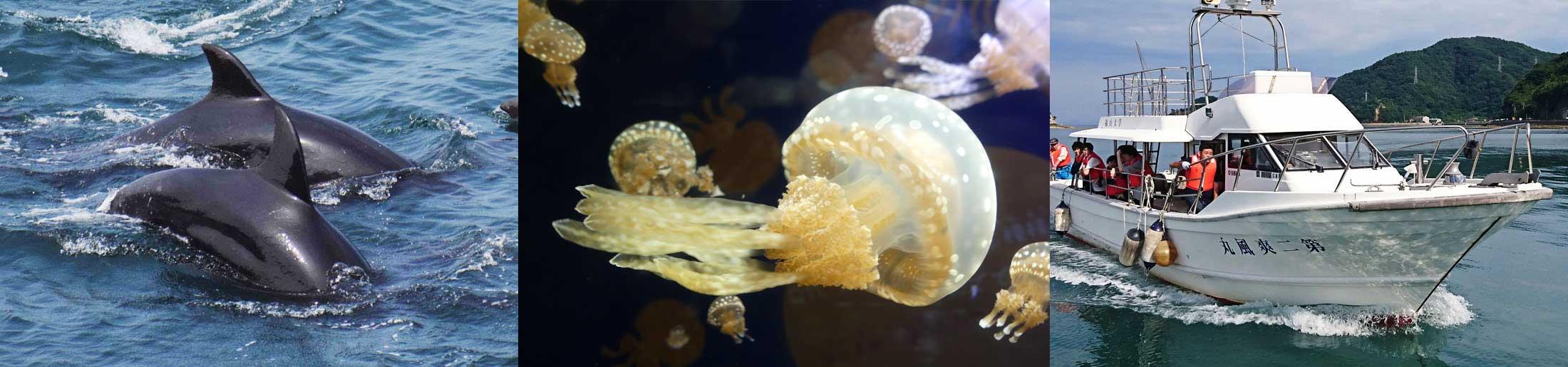 海洋生物科学科
