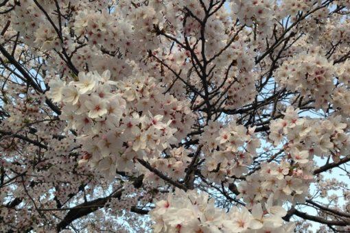 春。爽風と共に。入寮式。