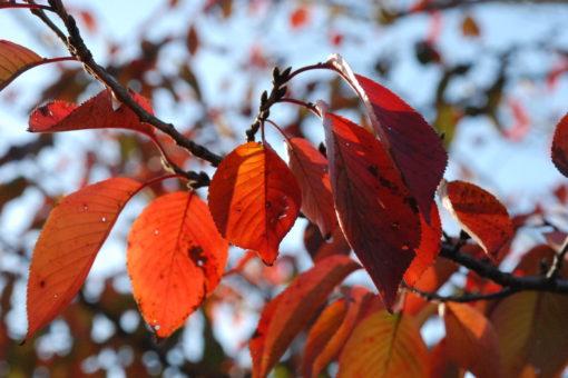 【キャンパス】今年も紅葉がきれいですね!!