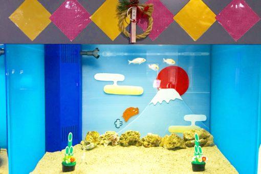 【海洋生物科学科】~新春恒例・特別展示水槽♬~