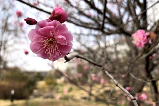 【キャンパス】季節の便り~2月の福山大学~