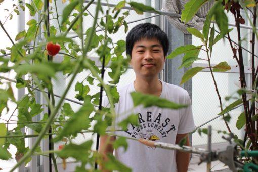 【生物工学科】トマトも育つ、育て方ひとつで