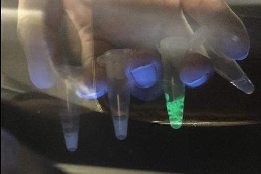【生物工学科】光るバクテリア