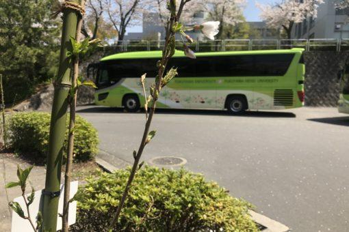 【大学】新しい桜の開花