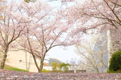 【キャンパス】第9回「福山大学の桜」ミニフォトコンテスト結果発表!