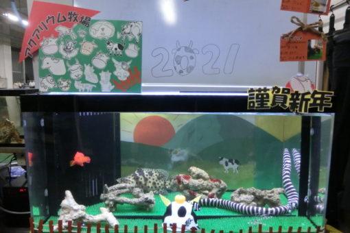 【海洋生物科学科】新春恒例!! ~お正月水槽♬~