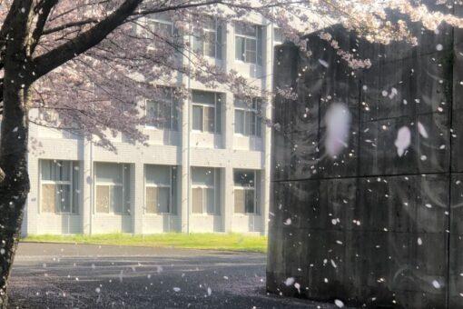 【キャンパス】第10回「福山大学の桜」ミニフォトコンテストの結果発表!