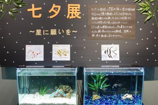 【海洋生物科学科】水族館・夏の特別企画「七夕展~星に願いを~」♬