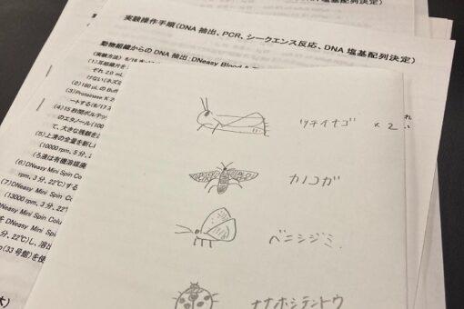 【生物工学科】野生動物のDNA分析法を学ぶ実習